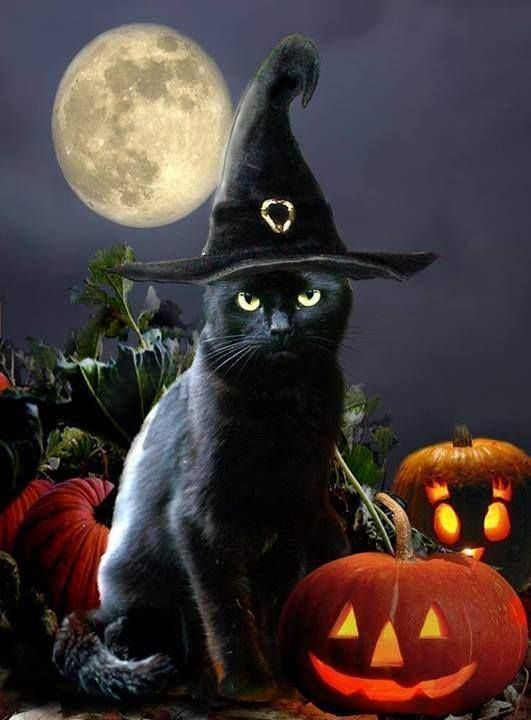 black-cat-with-pumpkin-and-hat